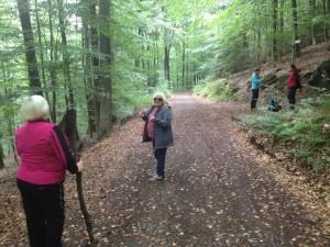 Letzte Etappe bei der Herbstwanderung zum Humbergturm (Foto: mg)